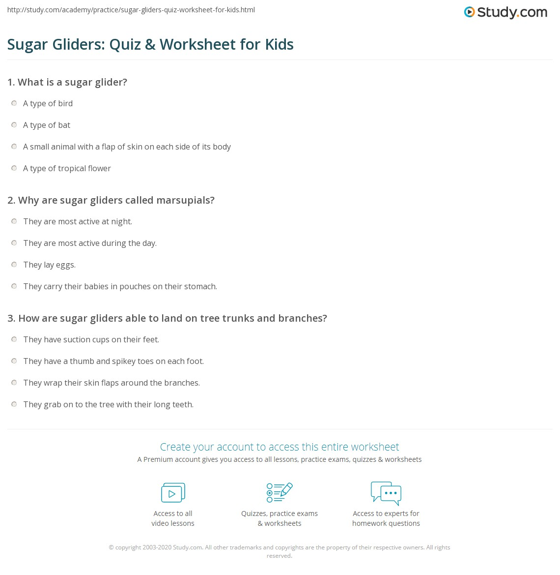 Sugar Gliders: Quiz & Worksheet for Kids | Study.com