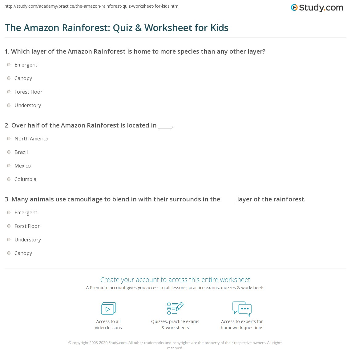 Worksheets Layers Of The Rainforest Worksheet the amazon rainforest quiz worksheet for kids study com print facts lesson worksheet