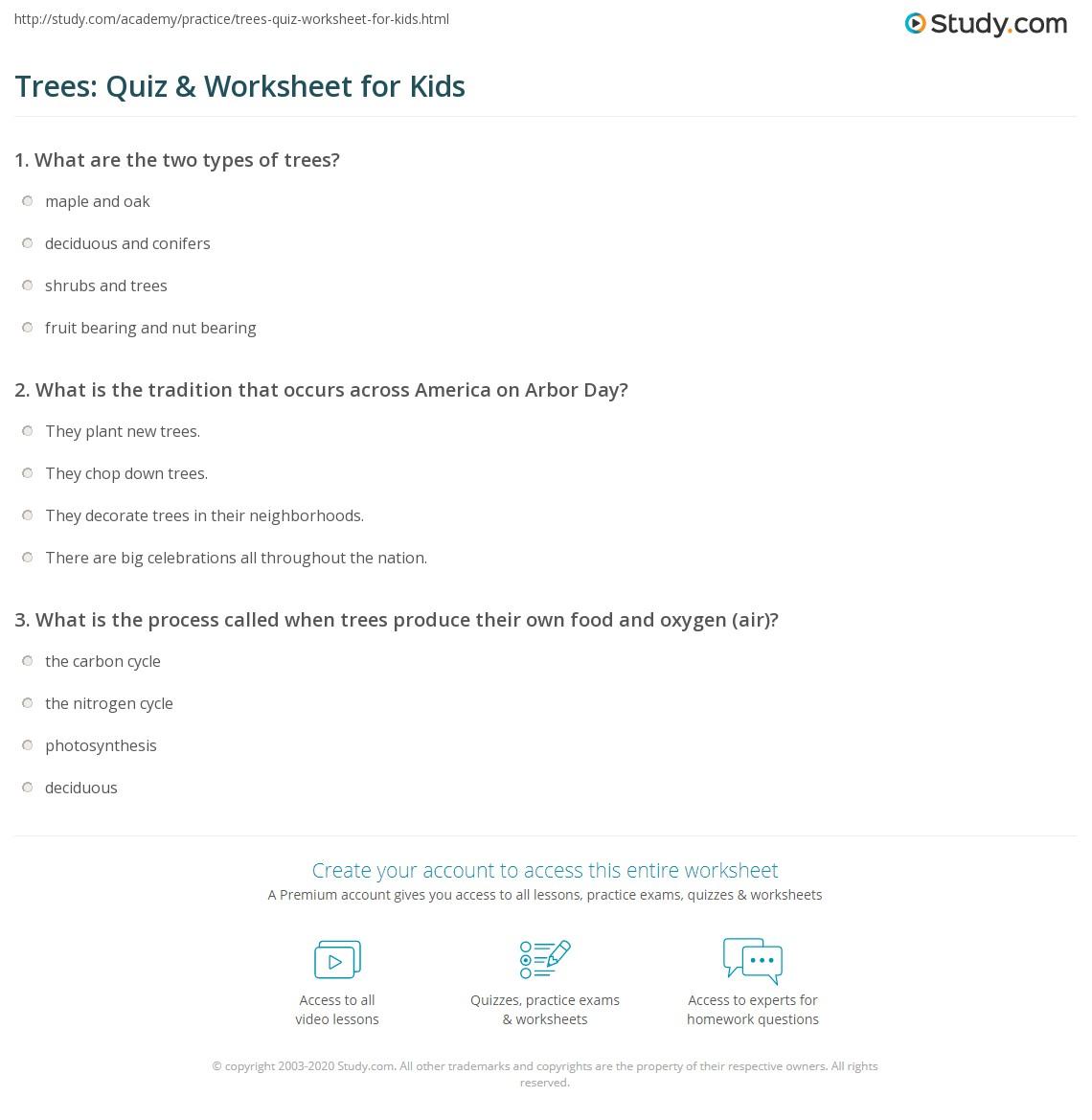 Trees: Quiz & Worksheet for Kids   Study.com
