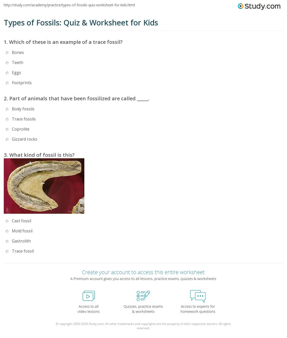 Worksheets Fossils Worksheet types of fossils quiz worksheet for kids study com print kinds lesson worksheet