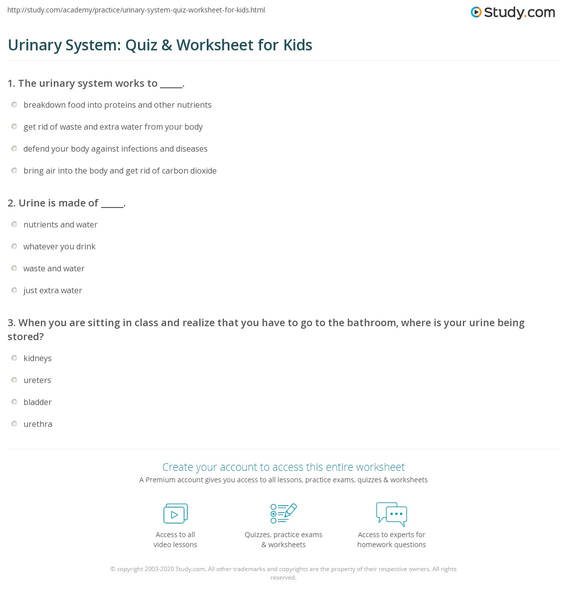 Urinary System Quiz Worksheet For Kids Study