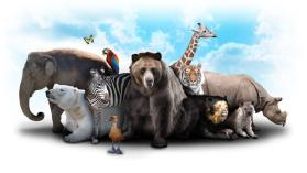 Animal Behavior Study Guide