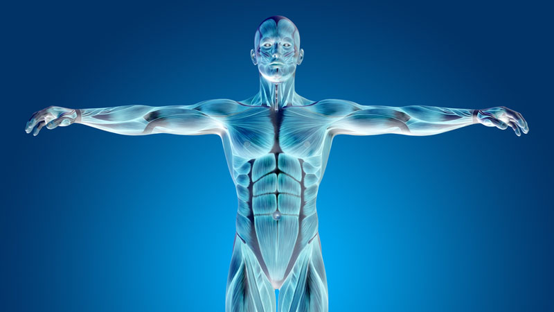Anatomy and Physiology Courses - Online Classes with Videos | Study.com