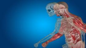 UExcel Anatomy & Physiology: Study  lead & Test Prep