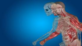 UExcel Anatomy & Physiology: Study  sheperd & Test Prep