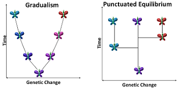 Speciation - NCEA Biology