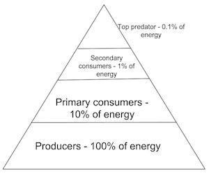 Energy pyramid worksheet high school