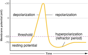 How to Label an Action-Potential Graph Showing ...