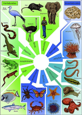 Animal Classification Keys Lesson For Kids Study