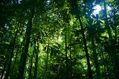 Forests are home to many kinds of animals
