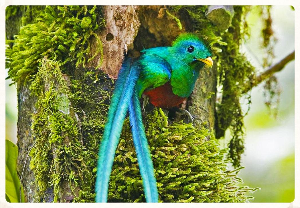 Rainforest Ecosystem Lesson for Kids | Study.com