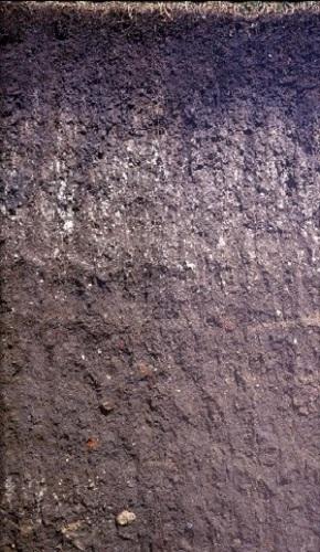 Quiz worksheet soil profile for Soil development definition