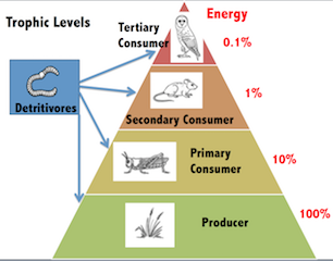what are trophic levels lesson for kids study com