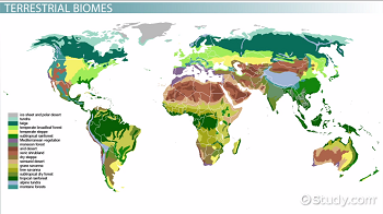 Map of biomes on Earth