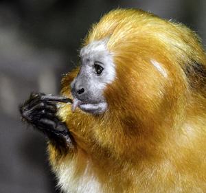 Study of primates