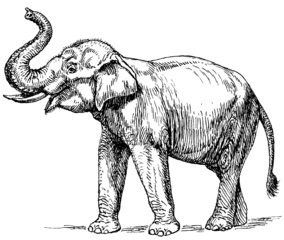 indian elephant facts lesson for kids study com