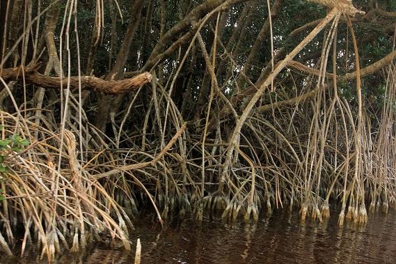 Estuary Biome Plants