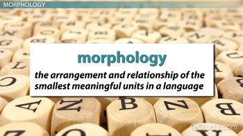 importance of studying morphology