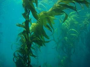 Ocean Plants: Types & Facts   Study.com