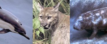 Images of mammals.