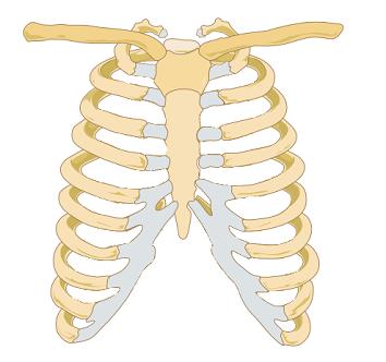 rib relay diagram costochondral separation: symptoms & diagnosis | study.com rib cartilage diagram #6