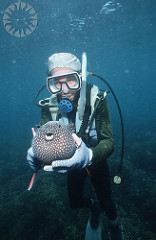 Diver Holding a Pufferfish
