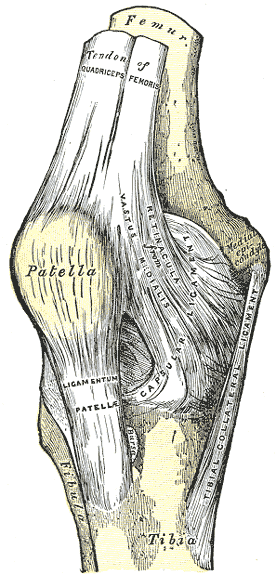 The patella, patellar ligament, and quadricep tendon can be seen here.