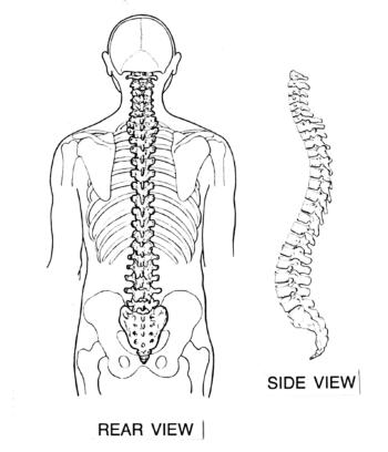 vertebrates vs invertebrates
