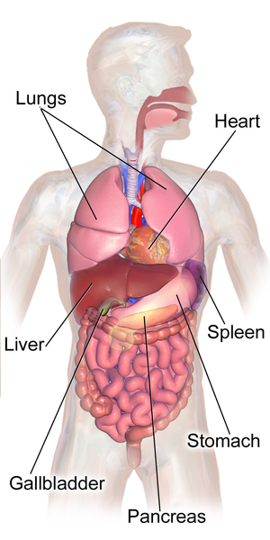 Hiatal Hernia: Causes, Symptoms & Treatment | Study.com