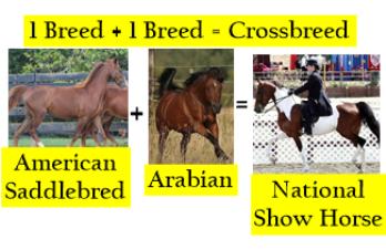 Crossbreeding Animals: Definition & Examples | Study com
