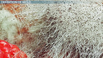 What is Mold? - Definition, Types & Causes - Video & Lesson