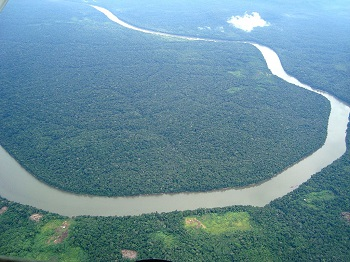 The Amazon Jungle