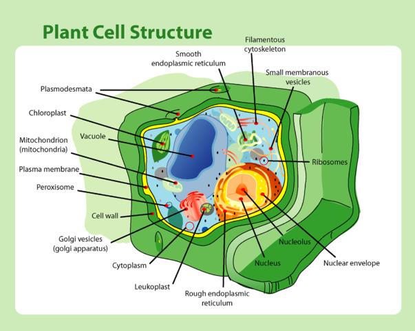 100 cells alive worksheet answers cell structures ck 12 foundation web lesson cells alive. Black Bedroom Furniture Sets. Home Design Ideas