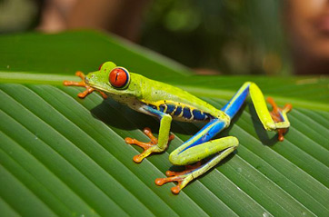 What is a Natural Habitat? - Definition & Habitat Destruction ...