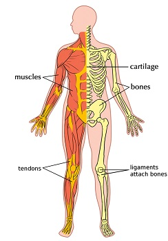 impact of trauma foreign bodies in the musculoskeletal system