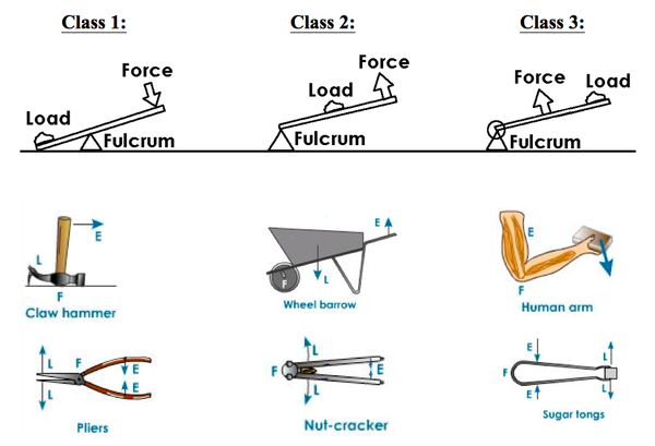 A Wheelbarrow Is An Example Of What Type Of Lever Study Com