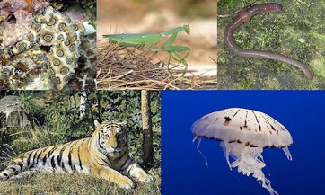 definition of animal diversity