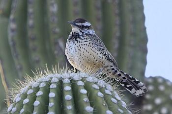 Desert Animals Lesson For Kids Study Com