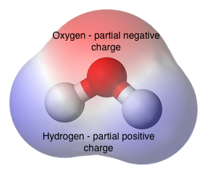 water molecule structure essay Water   h2o   cid 962 - structure, chemical names, physical and chemical properties, classification, patents, literature, biological activities, safety/hazards.
