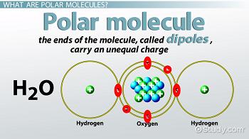 Polar Molecule: Definition & Examples - Video & Lesson Transcript ...