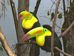 Pair of Toucans with Jagged Beaks