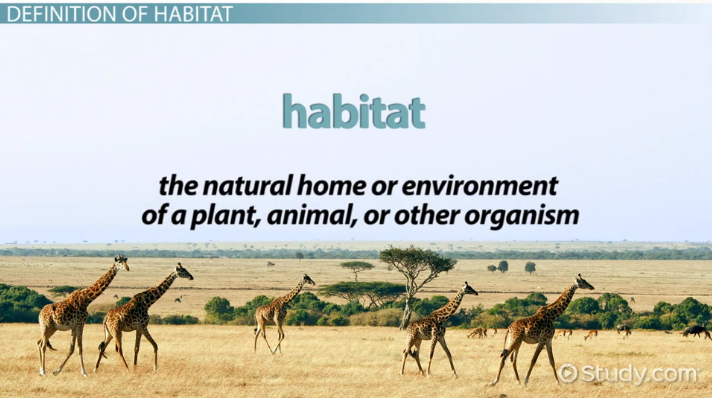 What Is Habitat Definition Explanation Video Lesson