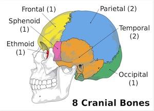 Image result for cranial bones