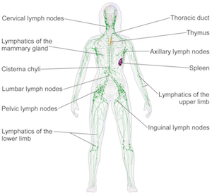 case study 21 the graduate student with swollen lymph nodes