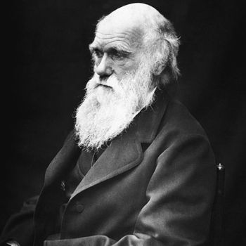 Darwin's theory of evolution by natural selection essay?