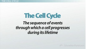 why we study the cell and What we do advisory council budget, financial management, and congressional material  scientists study cell movement to better understand how cells work, including how cancer cells.