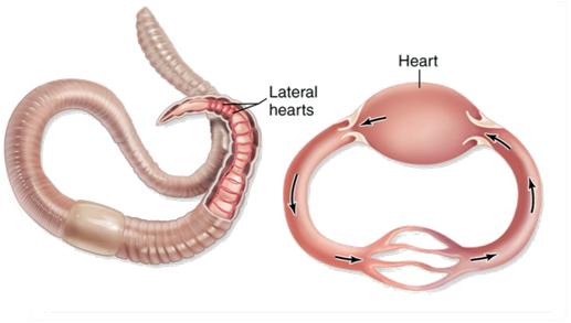 circulatory system essay digestive system essay digestive system essay questions digestive system essay digestive system essay questions