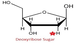 An image of deoxyribose.