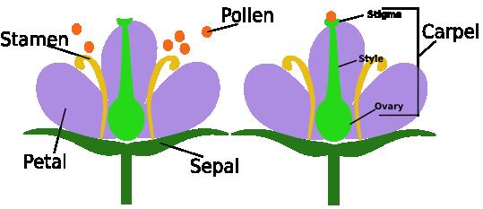 how to draw a means comparison diagram bonferoni