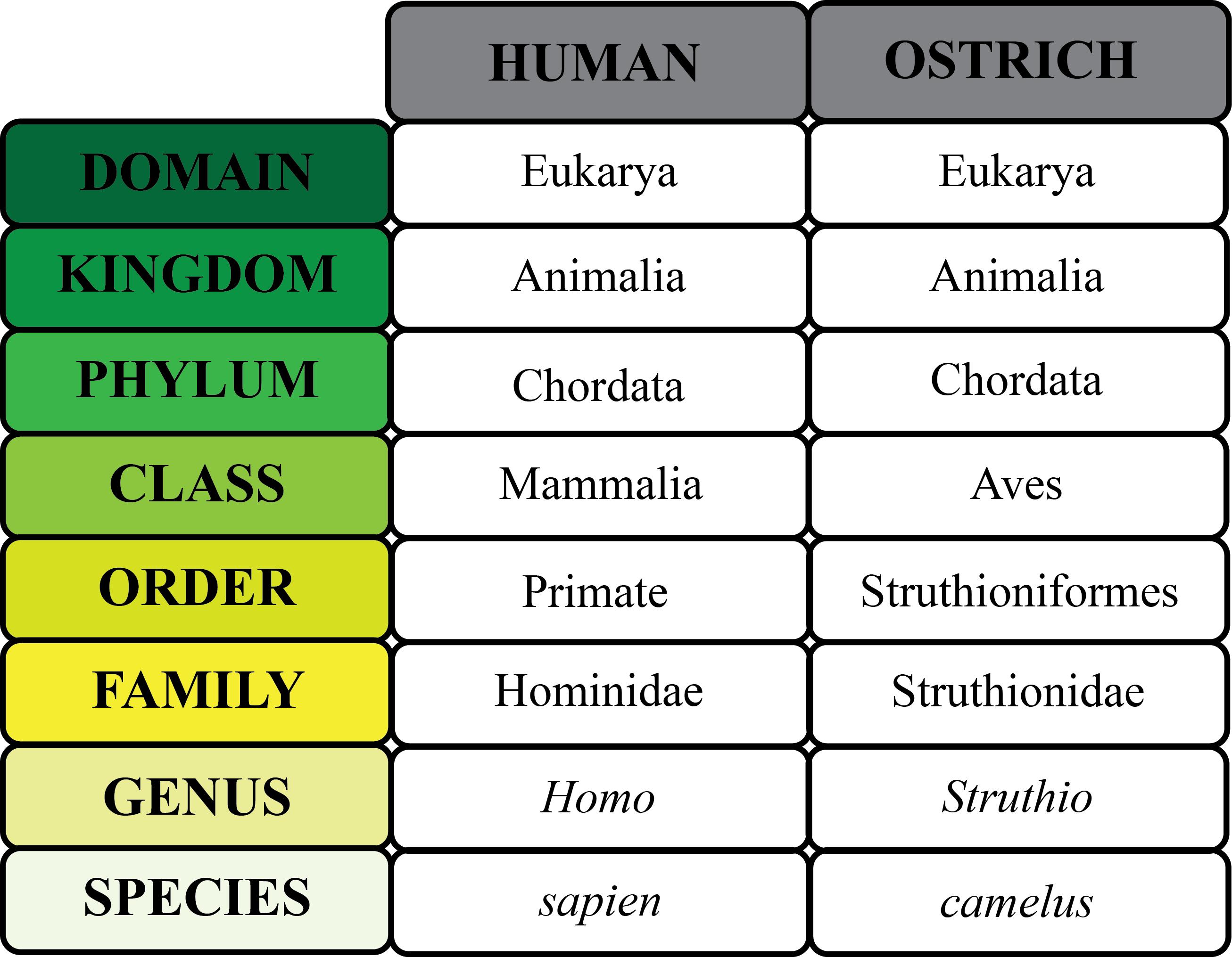 Organism: Definition & Explanation - Video & Lesson Transcript ...